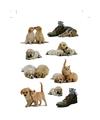 27x Honden-puppy en katten-poezen dieren stickers