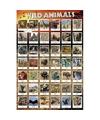 Decoratie poster wilde dieren 61 x 91 cm